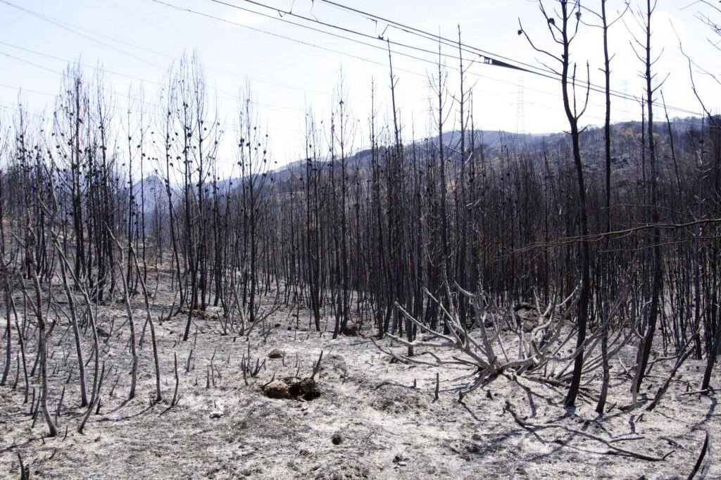 Una de las zonas carbonizadas por el incendio en Cortes de Pallás.
